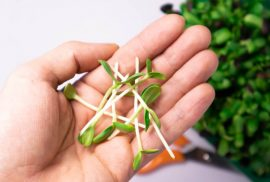 Hand holding microgreens